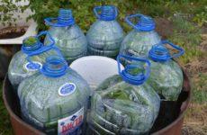 Выращивать огурцы в 5 литровых бутылках