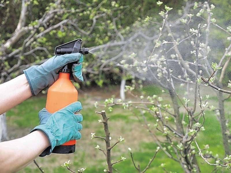 опрыскивание яблони