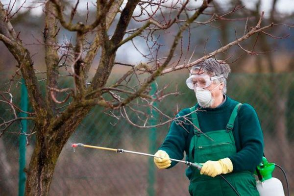 Способы обработки плодовых деревьев и кустарников осенью от вредителей
