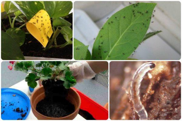 вредители на растениях