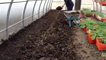 как приготовить почву для огурцов в теплице