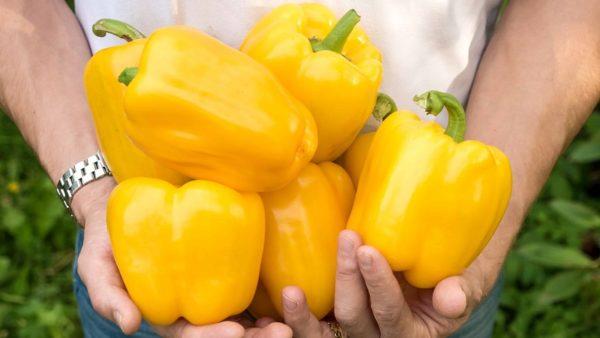 Перец Золотое (оранжевое) чудо
