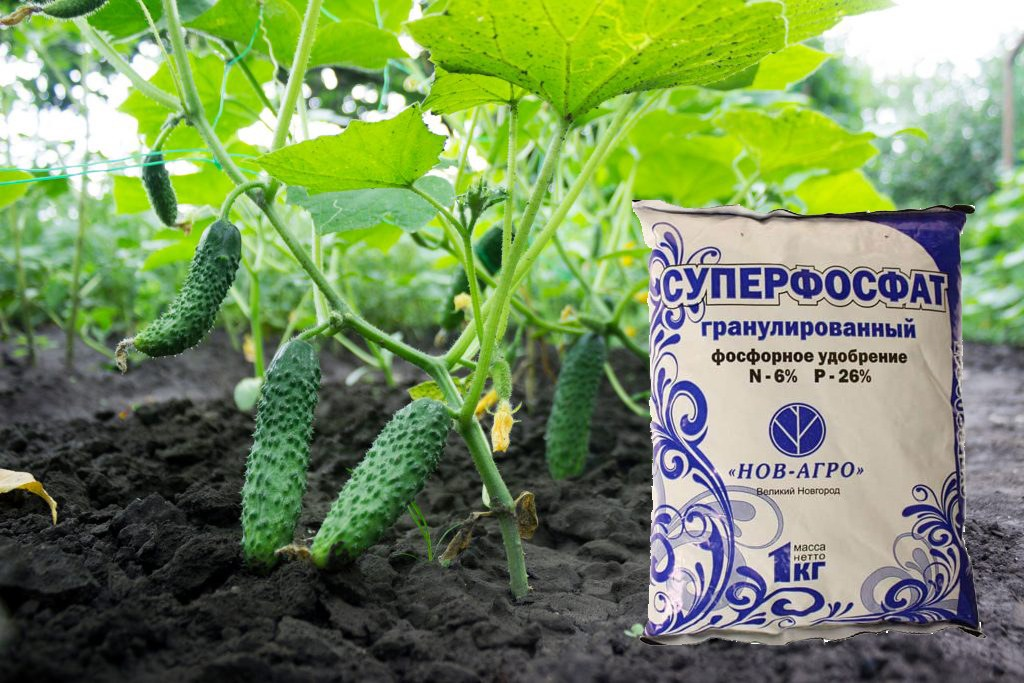 Суперфосфат для огурцов