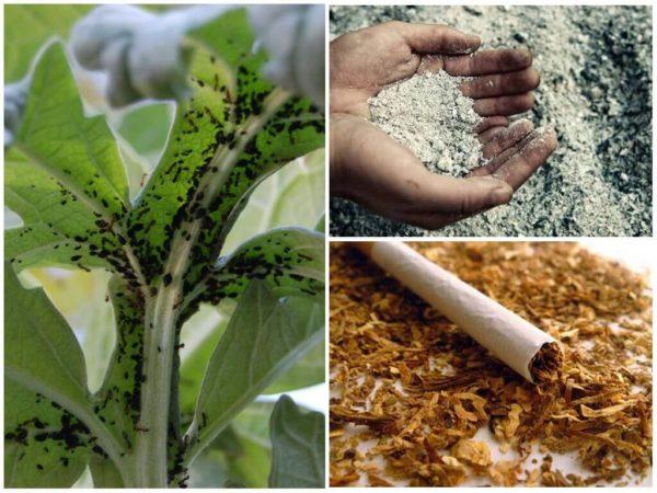 Зола, махорка и табак