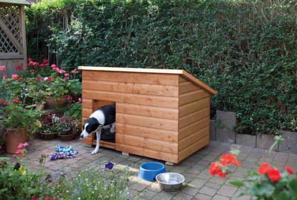 собака в деревянной будке