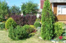 Хвойные растения для сада и дачи