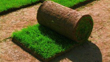 Газонная трава в рулонах