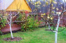 Укрытие персика на зиму