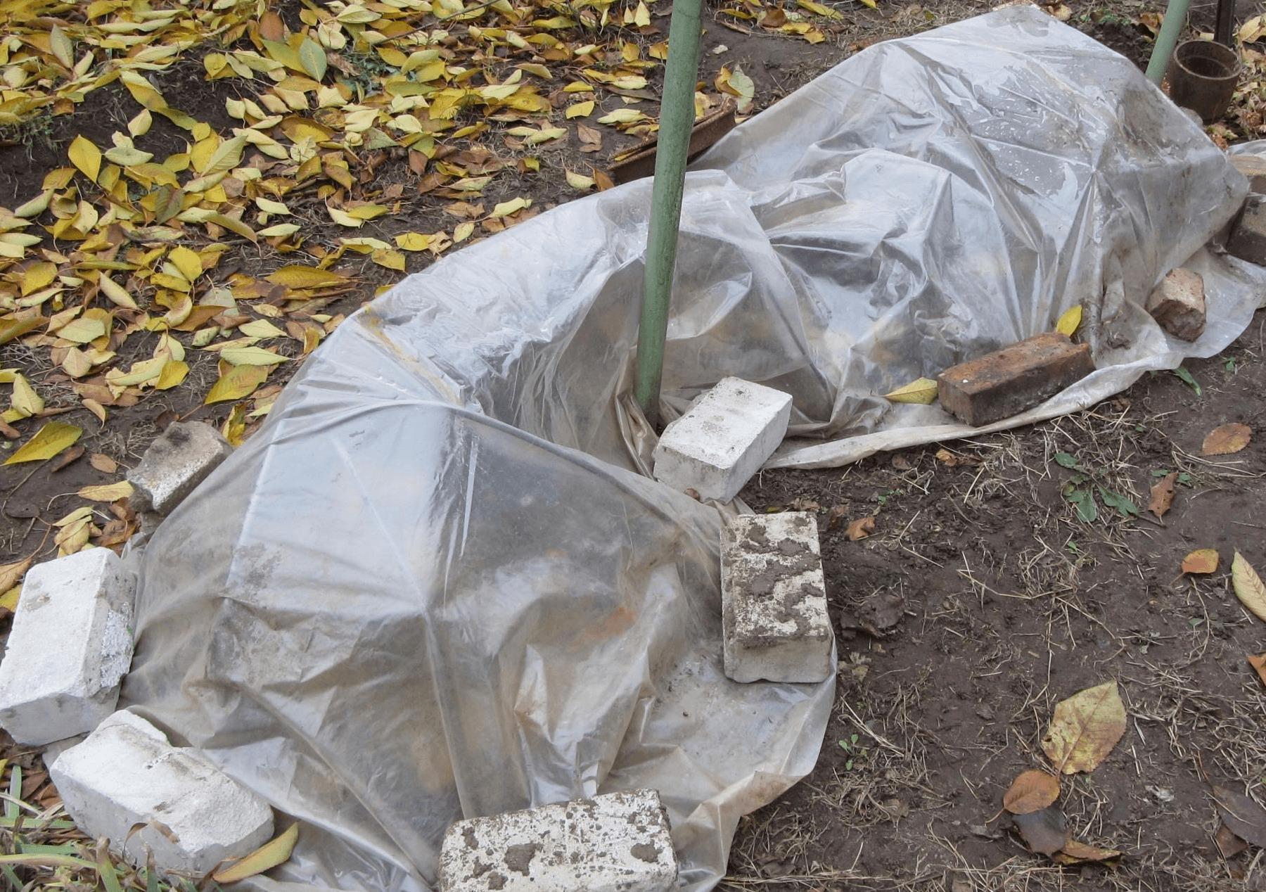 Когда убирать укрытие с винограда после зимы весной?
