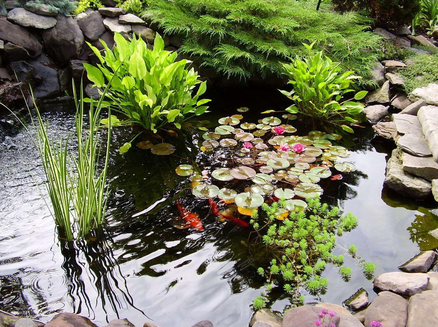 Растения возле водоема фото