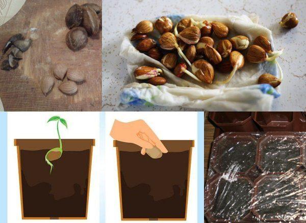 Извлечение семян