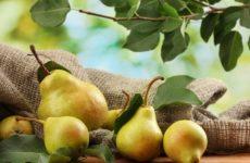 Как сохранить груши на зиму свежими в домашних условиях