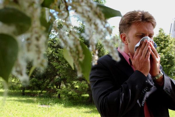 пыльца березы