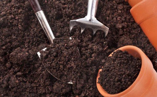 земля для рассады - подготовка