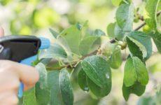 Как и чем обработать грушу