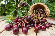 сорта черешни для Ленинградской области