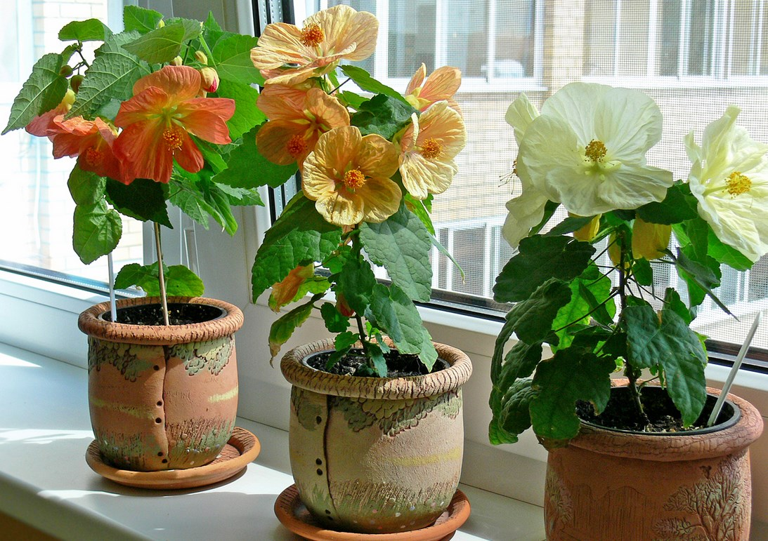 кто вырастил комнатные цветы из семян фото поискам вологжанина