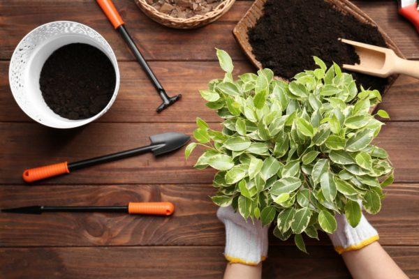 работы с растениями