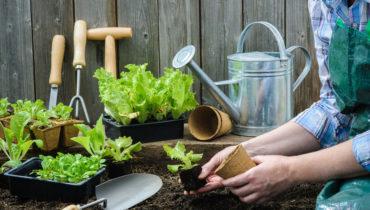 Лунный посевной календарь садовода и огородника на июнь