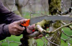 Обрезка яблони осенью в Сибири для начинающих в картинках пошагово
