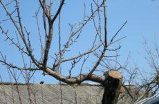 Как правильно делать обрезку старых яблонь: схема как омолодить старую яблоню, фото, видео для начинающих