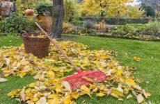 Почему осенью с деревьев облетает листва