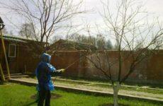 Уход за яблонями осенью: чем обработать, как ухаживать, нужно ли поливать