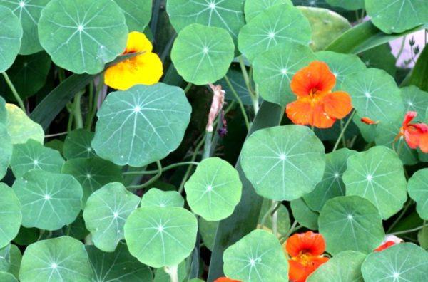 Отсутствие цветков