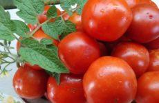 Какие жароустойчивые сорта томатов