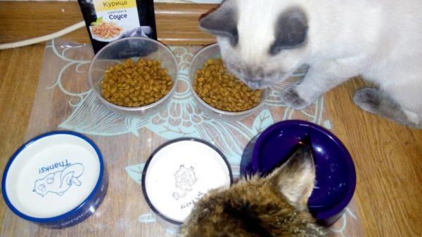 корм для кота